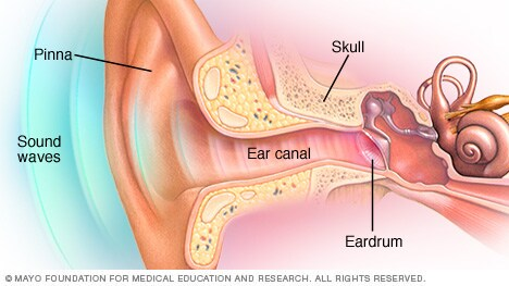 Illustration showing parts of the outer ear