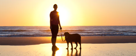 Person on beach with dog