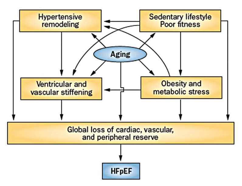 Chart of interaction of factors resulting in symptomatic HFpEF