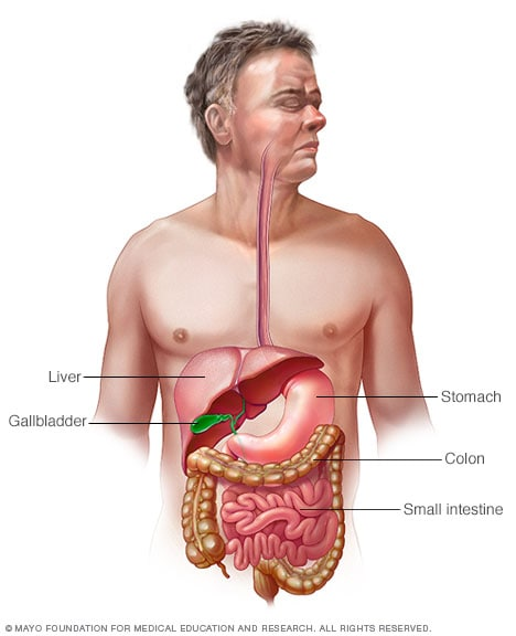 Illustration of digestive system in human body